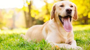 Voucher Code 80 Brain Training 4 Dogs 2020
